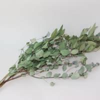 BIO Eukalyptus Bund getrocknet für DiY-Arrangements (DEMETER)  Bild 2