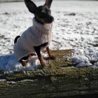 Hundemode: Teddy Hundepullover Bild 1