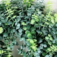 Eukalyptuskranz 2 farbig, Deko Kranz, Ø 30cm, Kranz, Floristikdeko Bild 4