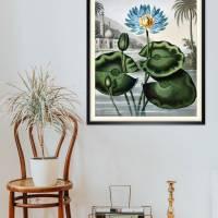 Blaue Wasserlilie Illustration Blumenbild 1804 Vintage Shabby Boho -  Kunstdruck Fineart - Wanddekoration Bild 3