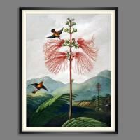 Große Mimose Illustration Blumenbild 1799 Vintage Shabby Boho - Kunstdruck Fineart - Wanddekoration Bild 2