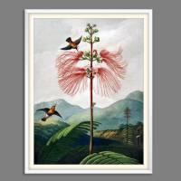 Große Mimose Illustration Blumenbild 1799 Vintage Shabby Boho - Kunstdruck Fineart - Wanddekoration Bild 4