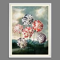 Nelken Blumen Illustration Blumenbild 1803 Vintage Shabby Boho - Kunstdruck Fineart - Wanddekoration Bild 5