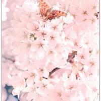 BLUMEN SIND DAS LÄCHELN... 3er Set in Rosè Handlettering Print Poster Kunstdruck Bild mit Spruch Zitat Frühlingsblumen Bild 2