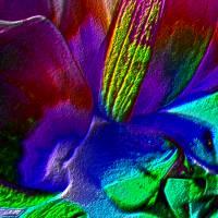 Blütenimpressionen strukturiert - Digital-ART - Kunstwerk 1/10 Bild 4
