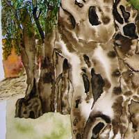 2000-jähriger Olivenbaum in Pedras d'el Rei (Portugal) - Original Aquarellmalerei, gerahmt Bild 2