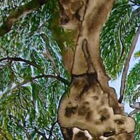 2000-jähriger Olivenbaum in Pedras d'el Rei (Portugal) - Original Aquarellmalerei, gerahmt Bild 3