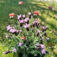 Blumenstecker Marienkäfer Bild 1