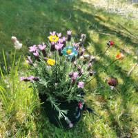 Blumenstecker Marienkäfer Bild 3