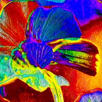 Glücksbringer - Digital-ART - Kunstwerk 1/10 – Design  Ulrike Kröll Bild 3