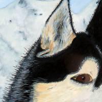 Husky - Original Aquarellmalerei, gerahmtes Unikat Bild 3