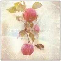 3er Set ROTE FRÜCHTE Bild auf Leinwand Holz Kunstdruck Print Äpfel Johannisbeeren Landhausstil VintageStyle ShabbyChic  Bild 7