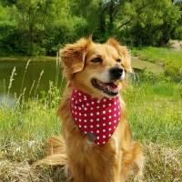 Hundehalstuch zum Binden, Punkte groß rot Bild 6
