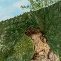 Iberischer Olivenbaum - Original Aquarellmalerei, gerahmtes Unikat Bild 3