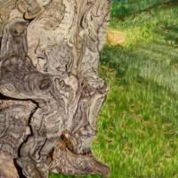 Iberischer Olivenbaum - Original Aquarellmalerei, gerahmtes Unikat Bild 4