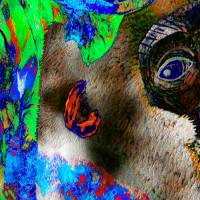 Dschungel - Impressionen - Digital-ART - Kunstwerk 1/10 – Design  Ulrike Kröll Bild 3