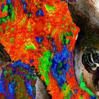 Dschungel - Impressionen - Digital-ART - Kunstwerk 1/10 – Design  Ulrike Kröll Bild 4