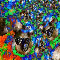 Dschungel - Impressionen - Digital-ART - Kunstwerk 1/10 – Design  Ulrike Kröll Bild 5