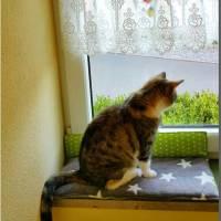 Katzenkissen / Fensterbankkissen / Kissen für Fensterbank / 52cm / extra weich Bild 7