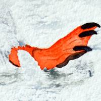 Mit Flossen durch den Schnee - Original Aquarellmalerei, gerahmtes Unikat Bild 3
