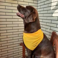personalisiertes Hundehalstuch Bild 3