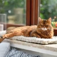 Fensterbankbett für Katzen - Katzenbett - Katzenkorb aus reiner Schurwolle Bild 1