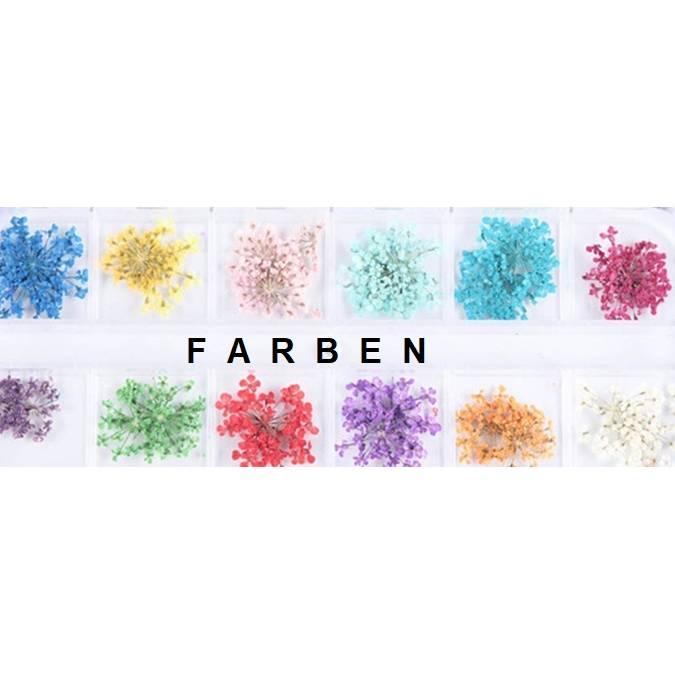 Getrocknete Blüten in Box, Blumen, bunt gemischt, zum Harz gießen oder befüllen von Medaillons Bild 1