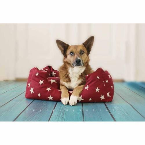 Hundebett, Katzenbett, Sterne, rot, Weihnachten, Welpe, gemütlich, Schlafplatz, Kissen, vintage, Hund, Katze, Haustier, Tier, kuschelig