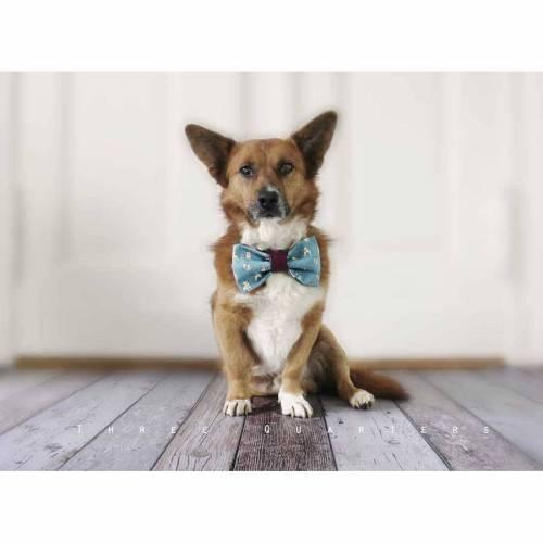 Fliege/Schleife für deinen Hund, französische Bulldogge, Haustier, Frenchie, Mops, Corgi, niedlich, süß, Accessoires, Welpe, Fotografie