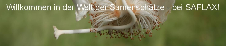 SAFLAX auf kasuwa.de