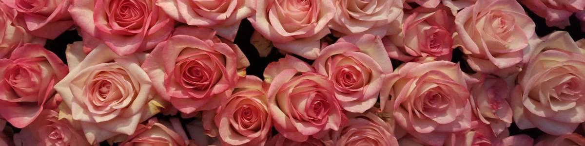 rose design auf kasuwa.de