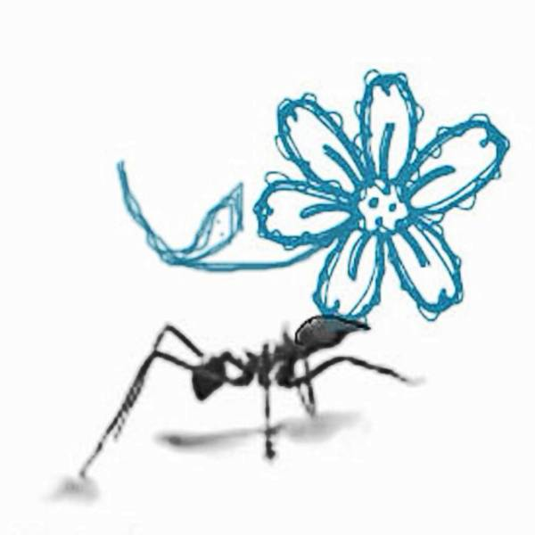 Ants - Bildermanufaktur Wieka Bloom