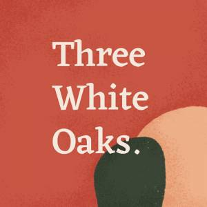 Three White Oaks